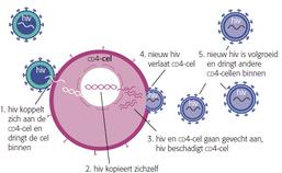 De levenscyclus van hiv