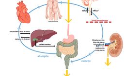 Vereenvoudigde weergave van farmacokinetiek