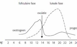 Oestrogeen en progesteron gedurende de menstruatiecyclus